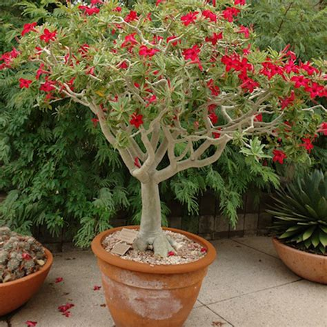 popular outdoor plants desert gardening using houseplants outdoors in the southwest