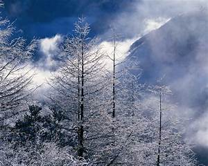 Beautiful Winter Landscapes Wallpapers | HD Wallpapers ...