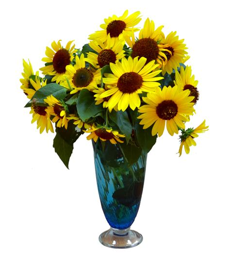 Flower Vase Png by Sun Flowers In Vase Png Stock Photo 0049 By Annamae22 On