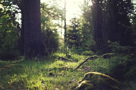 picture wood tree landscape ecology nature