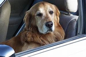 view image image= &picture=dog driving