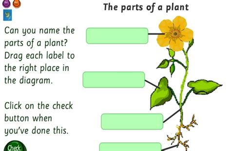 Vedkids The Parts Of A Plant