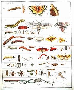 Free Printable Insect Diagram