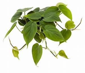 Plants - NextGen Living Walls