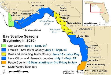fwc sets scallop season local news chronicleonlinecom