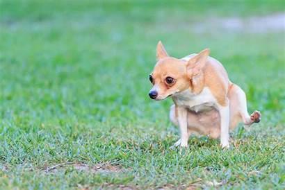 Pee Outside Dog Train Training