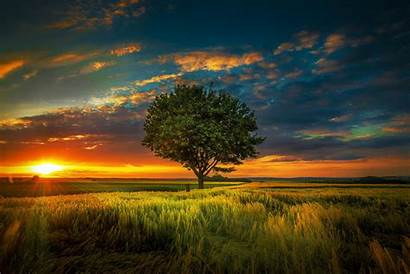 Sunset Summer Nature Wallpapers Tree Lonely Field