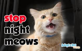 how to get to stop cat stop cat meowing at 187 adoptapet