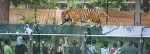 Billet Zoo De Beauval Leclerc : zoo de thoiry et ch teau de thoiry visite et billets en ligne come to paris ~ Medecine-chirurgie-esthetiques.com Avis de Voitures