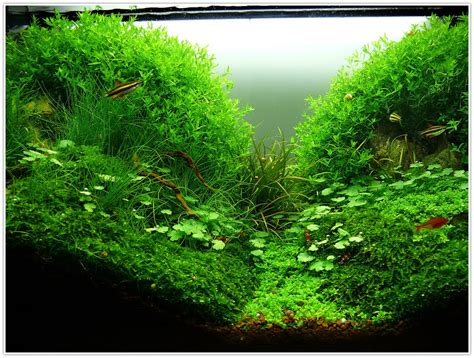 Fish Tank Aquascaping by Lighting For Planted Aquarium Tropical Fish