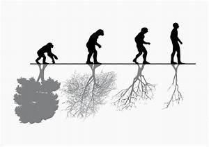 Evolucion: Evolucion y Microevolucion