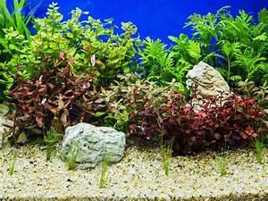 Pflanzen Für Aquarium : dehner ihr online shop f r garten pflanzen balkon tiere ~ Buech-reservation.com Haus und Dekorationen