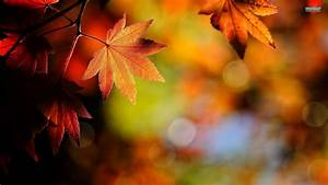 Fall, Leaves, Wallpaper, Hd, 62, Images