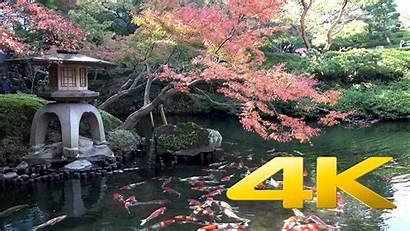 Koi 4k Pond Ultra Fish Japan Wallpapers