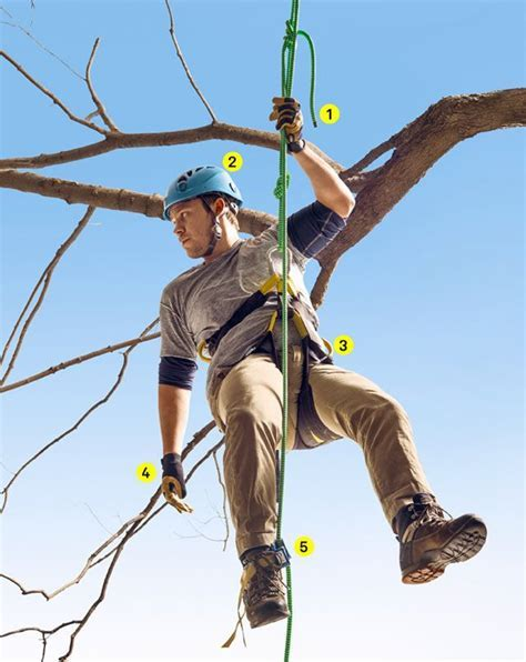 The Gear You Need to Climb the Trees   Logging   Tree