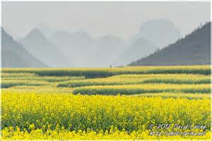 Rapeseed Field Luoping China