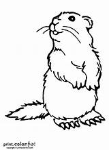 Coloring Woodchuck Pages Groundhog Print Printables Animal Groundhogs Drawing Colouring Dog Printable Ink Low Puzzles Printcolorfun Cute Fun Crafts Prairie sketch template