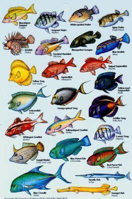 aquarium fish names  alphabetical order  aquarium
