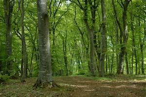 Bilder Vom Wald : naturschutz in wald forstwirtschaft lbv ~ Yasmunasinghe.com Haus und Dekorationen