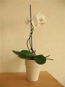 Orchideen Klebrige Blätter : orchideen krankheiten bl tter gr ser im k bel berwintern ~ Whattoseeinmadrid.com Haus und Dekorationen
