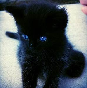 I want a Black Kitten with Blue eyes!!! | Animals ...