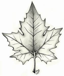 Black And Grey Maple Leaf Tattoo Design | tattoo ...