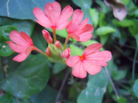 december flower  large images