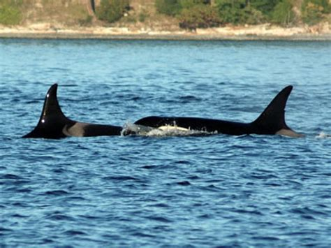 Half-day Whale Watching Tour