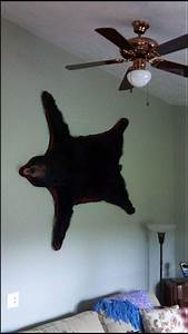 How to hang a bear rug rugs ideas