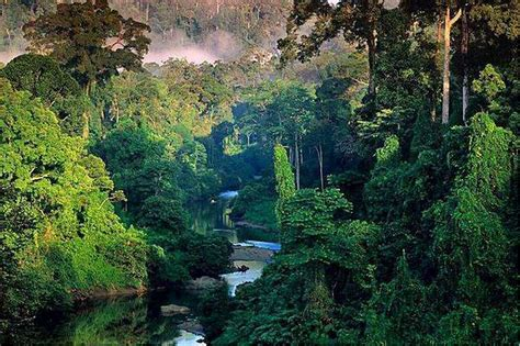 best forests in america 10 of the most beautiful forests in the world best amazing places on earth