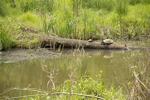 Newman Wetlands Center