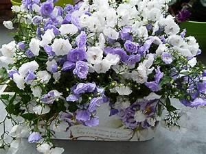 Fleur D Hiver Pour Jardinière : choisir une plante pour jardini re quelques id es et astuces ~ Dailycaller-alerts.com Idées de Décoration