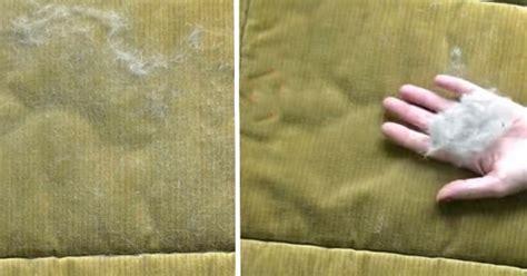 pipi de chien sur canapé en tissu retirer les poils des animaux du canapé ou des tapis