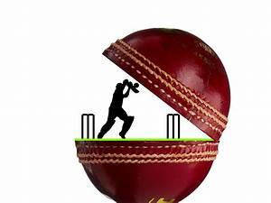 Cricket, Vector