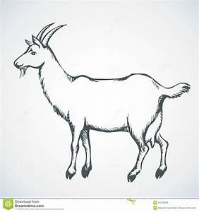 Goat. Vector Drawing Stock Vector - Image: 52142040
