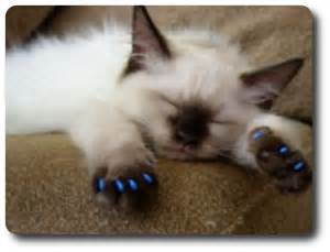 declawing cats to declaw or not to declaw cat astrophes top ten cat