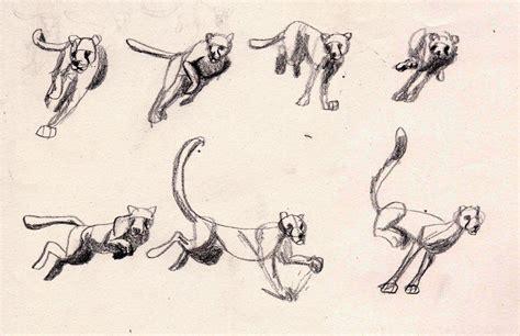 animal drawing  animation poses  bobsheaux