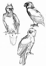 Harpy sketch template