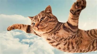 Cat Funny Desktop Computer Wallpapertag