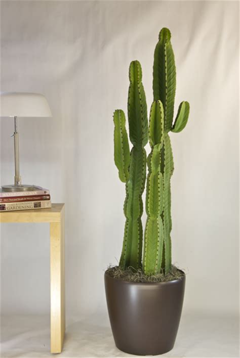 indoor cactus plants quotes