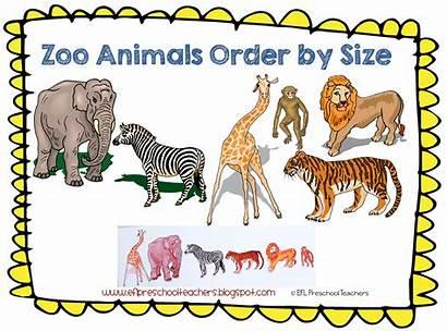 Zoo Animal Preschool Theme Kindergarten Ell Efl