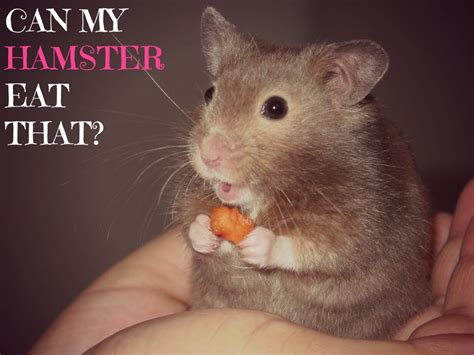 Are Bananas Good For Hamsters 22 Foods Hamster Can Can