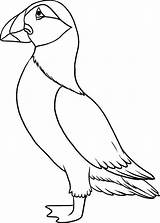 Puffin Coloring Pages Draw Toddlers Drawing Colouring Step Puffins Bird Drawings Outline Printable Easy Line Print Template Craft Birds Momjunction sketch template