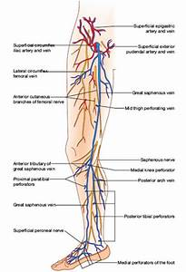 Tibial vein thrombosis