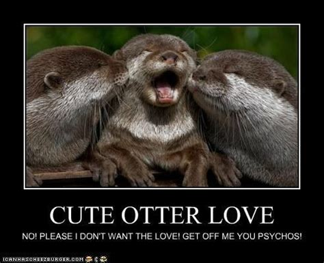 Otter Love Meme - 17 best images about cute otters on pinterest pictures of spirit animal and otter puns