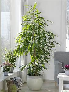 Plante D Intérieur Haute : 4 plantes d 39 int rieur sp cial amateurs d tente jardin ~ Dode.kayakingforconservation.com Idées de Décoration