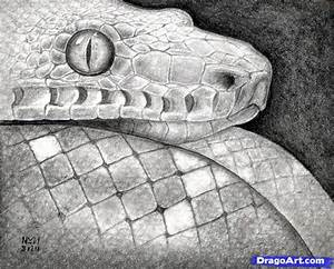 How to Sketch a Snake, Snake Head, Step by Step, Realistic ...