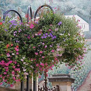 Blumenampeln f r balkon und terrasse bepflanzen befestigen for Blumenampeln für balkon