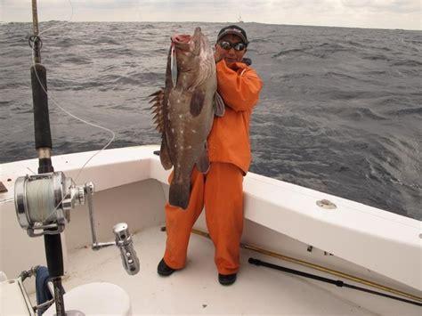 grouper setup fishing fish