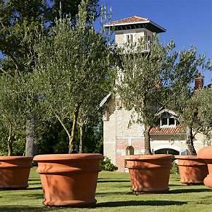 Gros Pot Pour Olivier : un olivier dans mon jardin 7 photos voir c t maison ~ Melissatoandfro.com Idées de Décoration